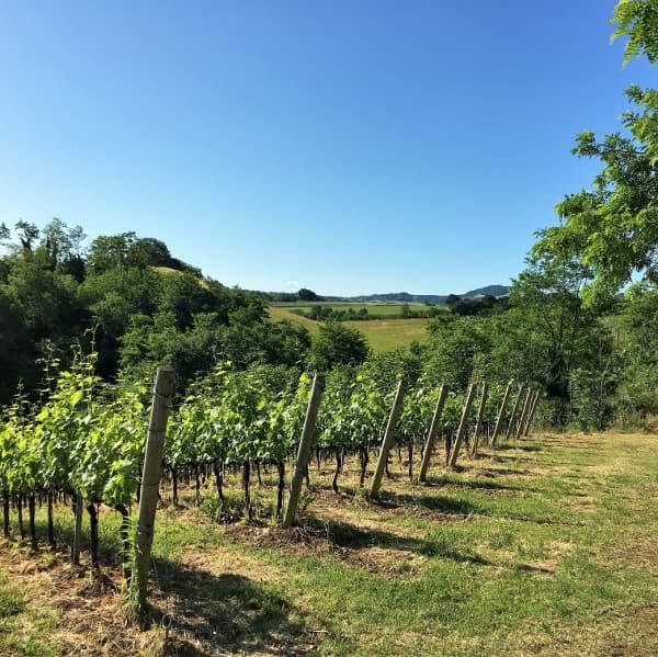 vigne-palazzona-di-maggio-ozzano-emilia
